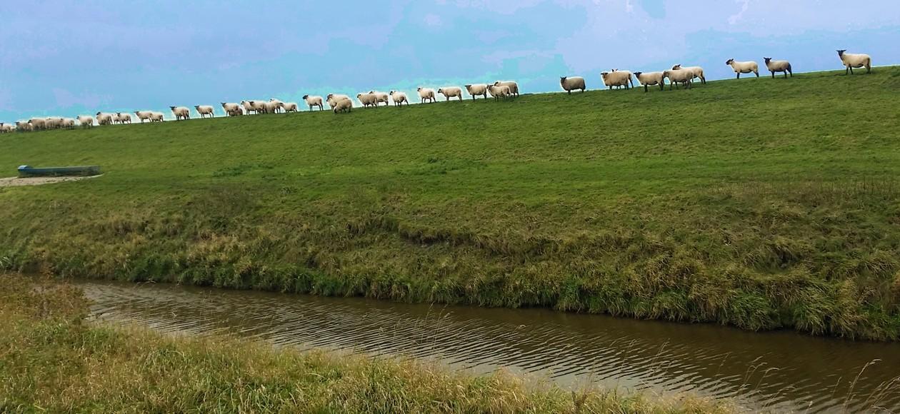 12-Ostfriesland
