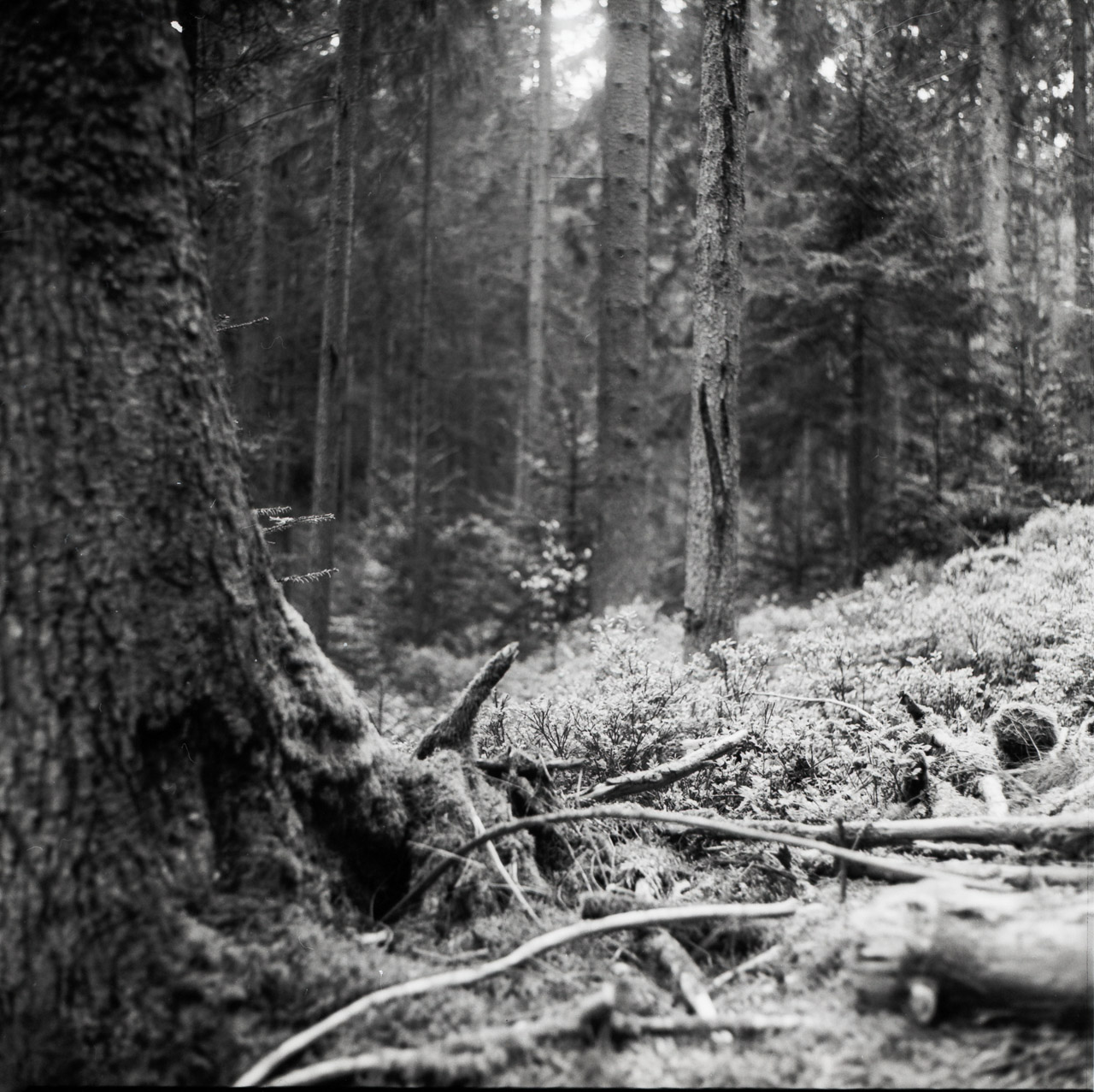 Kiew88-Forest