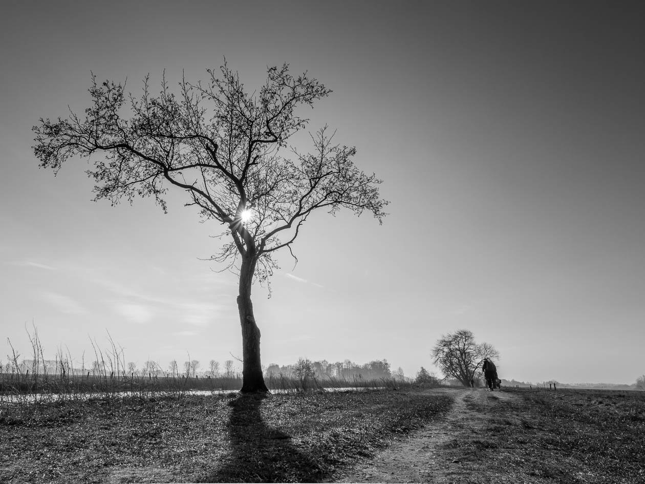 Baum in Gegenlicht