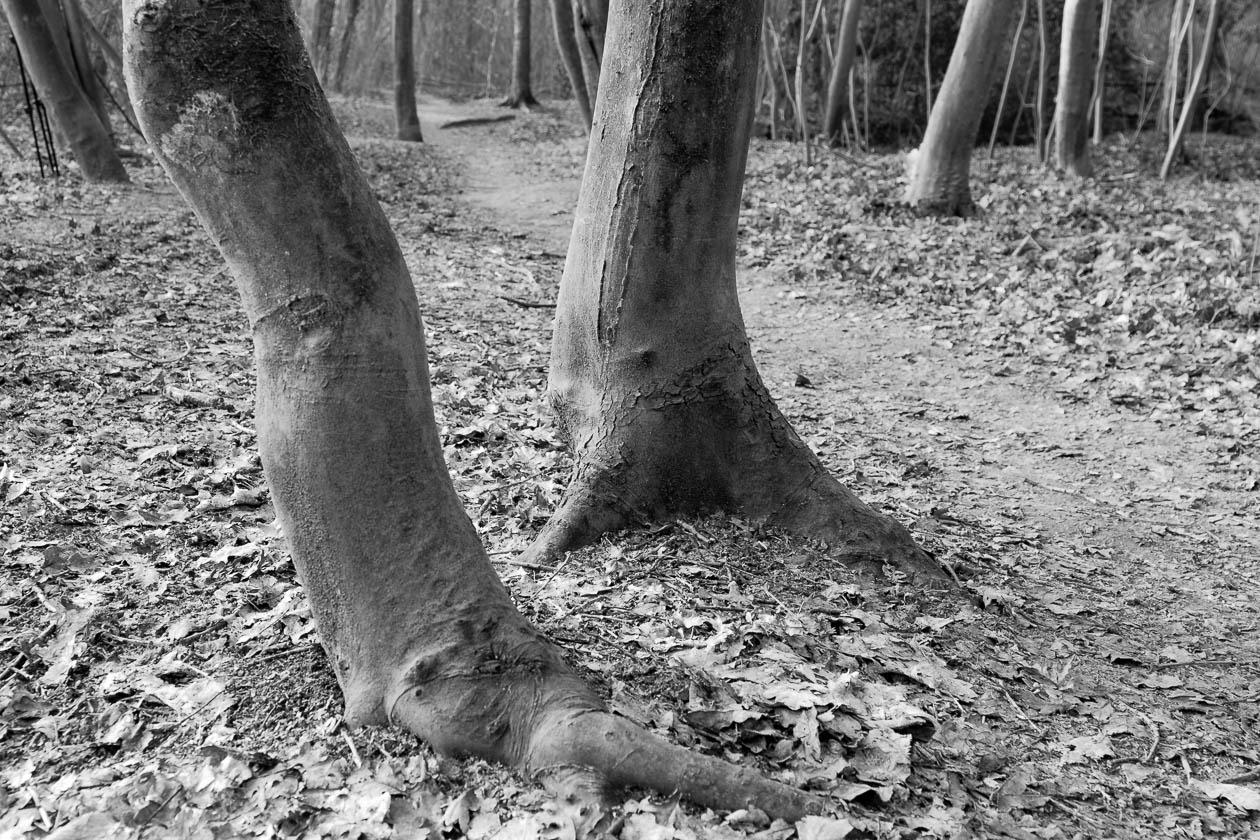 Dinofüße im Wald