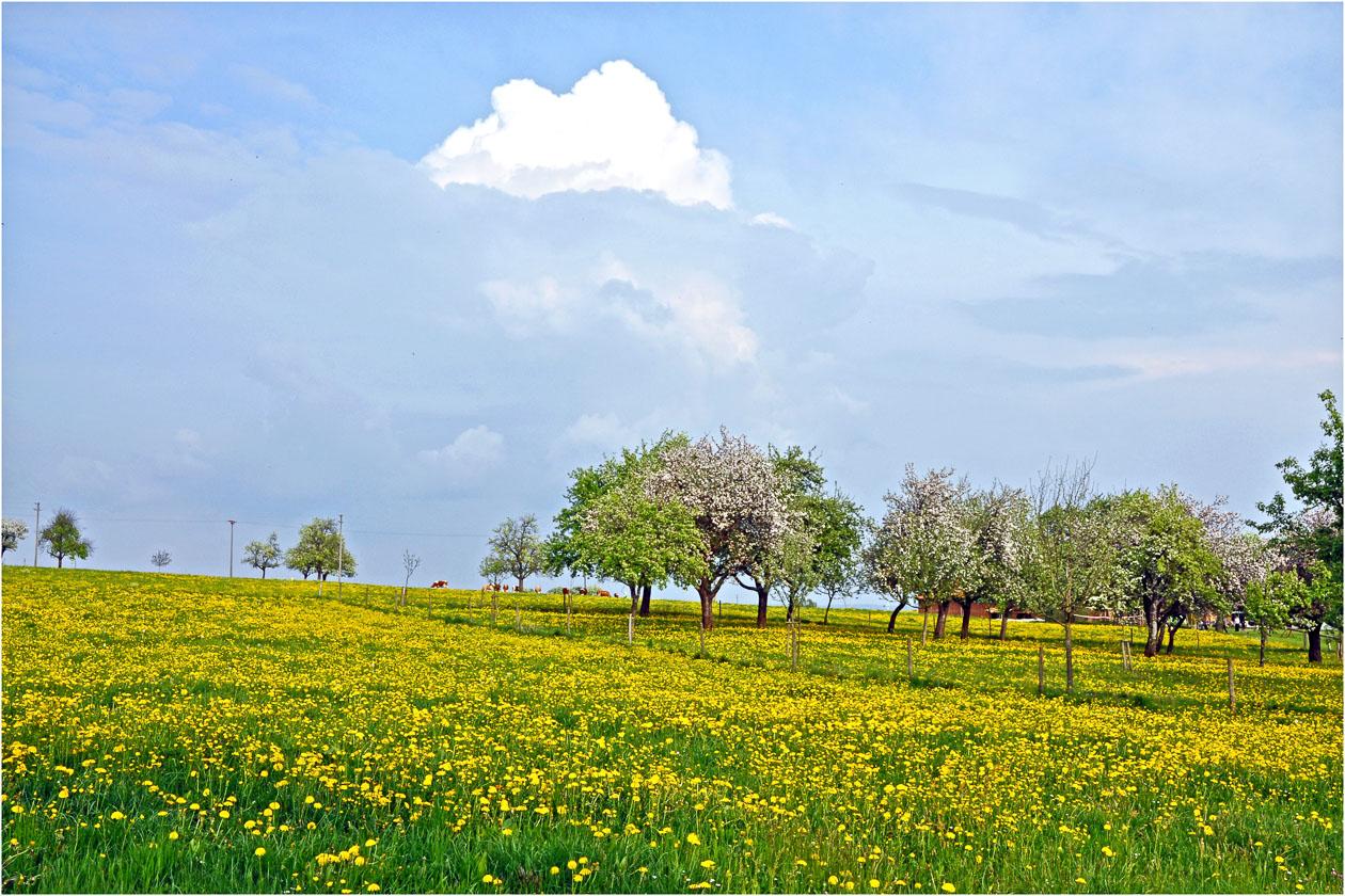 Frühling im Deggenhäuser Tal (Claire Sick)