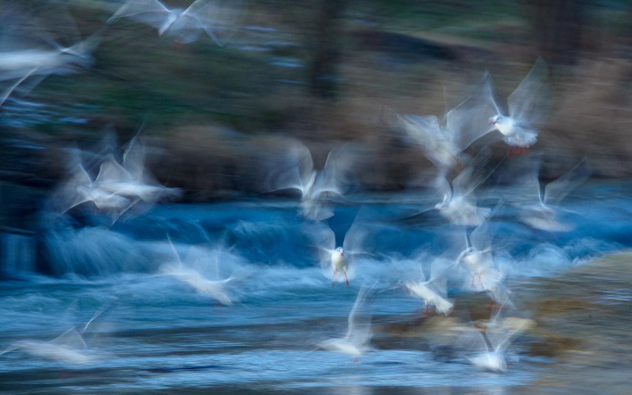 Die Leichtigkeit des Vogelfluges