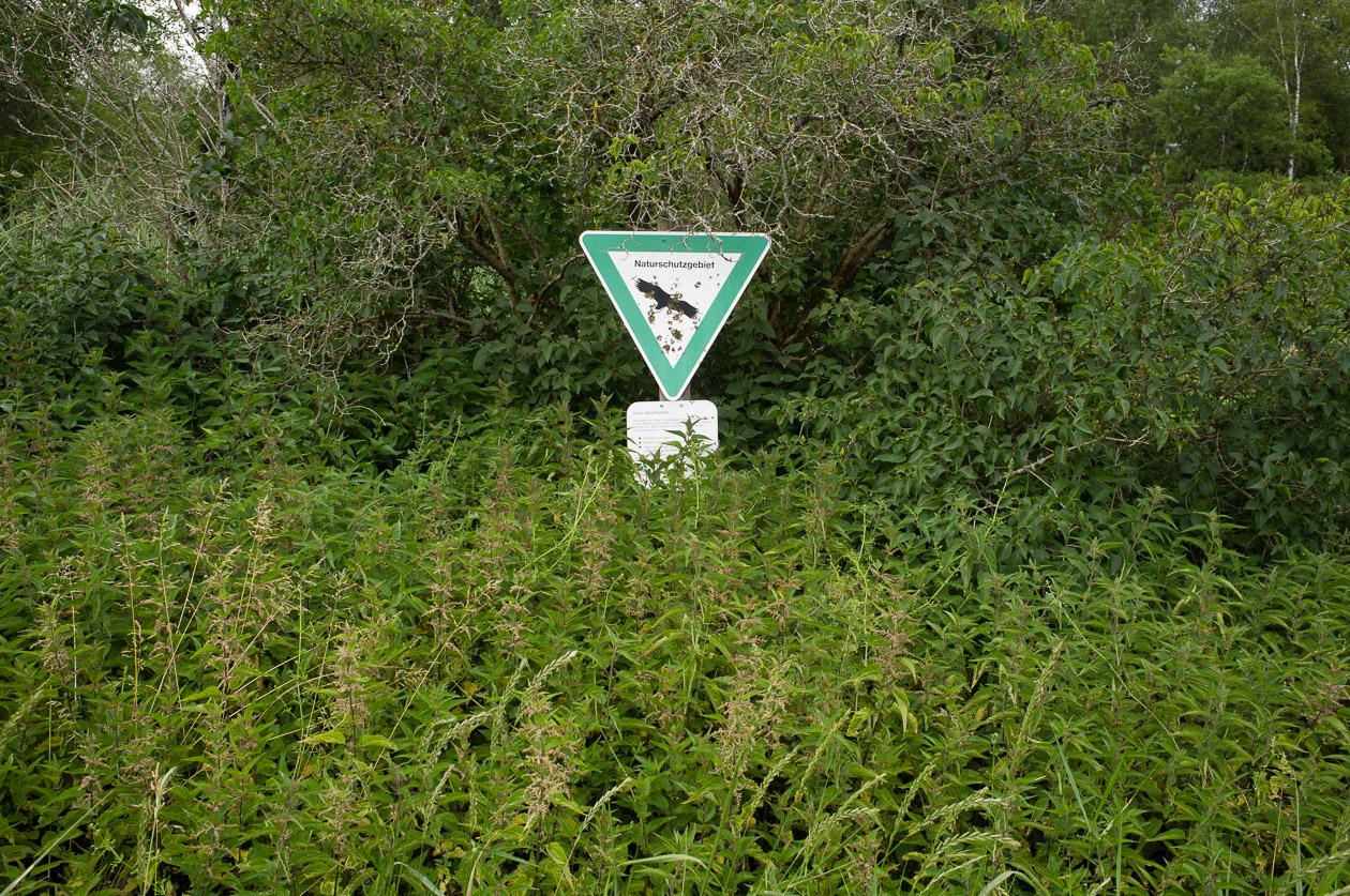 Brennesseln als Indikator für den hohen Stickstoffgehalt im Niedermoor