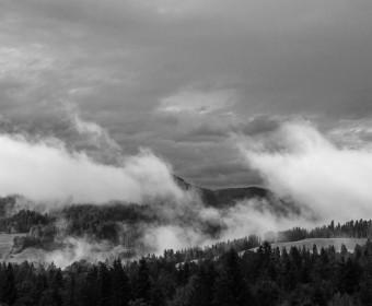 Bergwald nach Regen (Foto: STEFAN BARK)