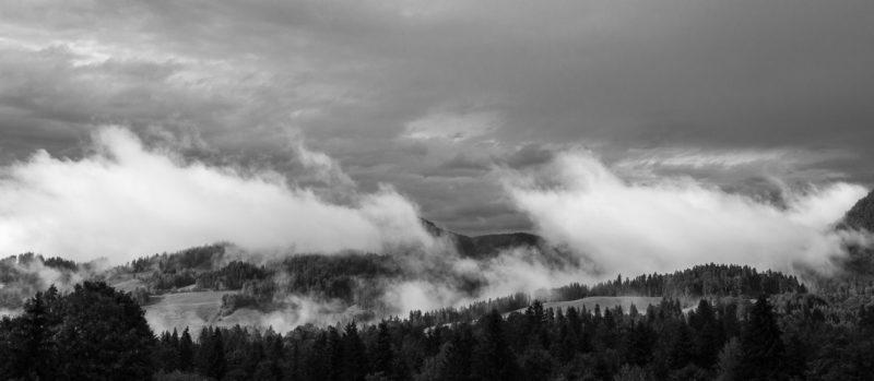 Bergwald nach Regen