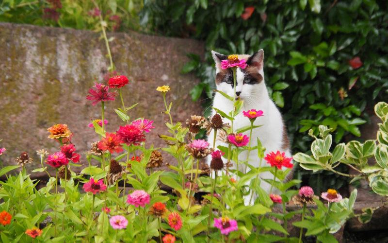 Garten im Turckheim