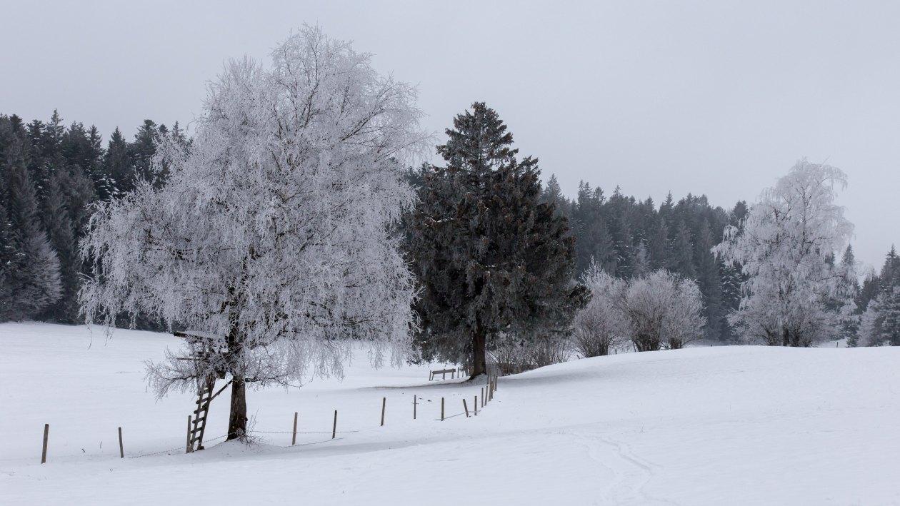 Verschneite Landschaft1