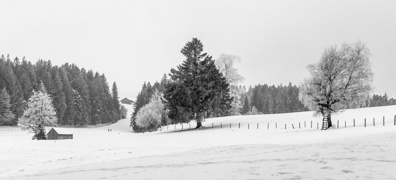 Verschneite Landschaft2