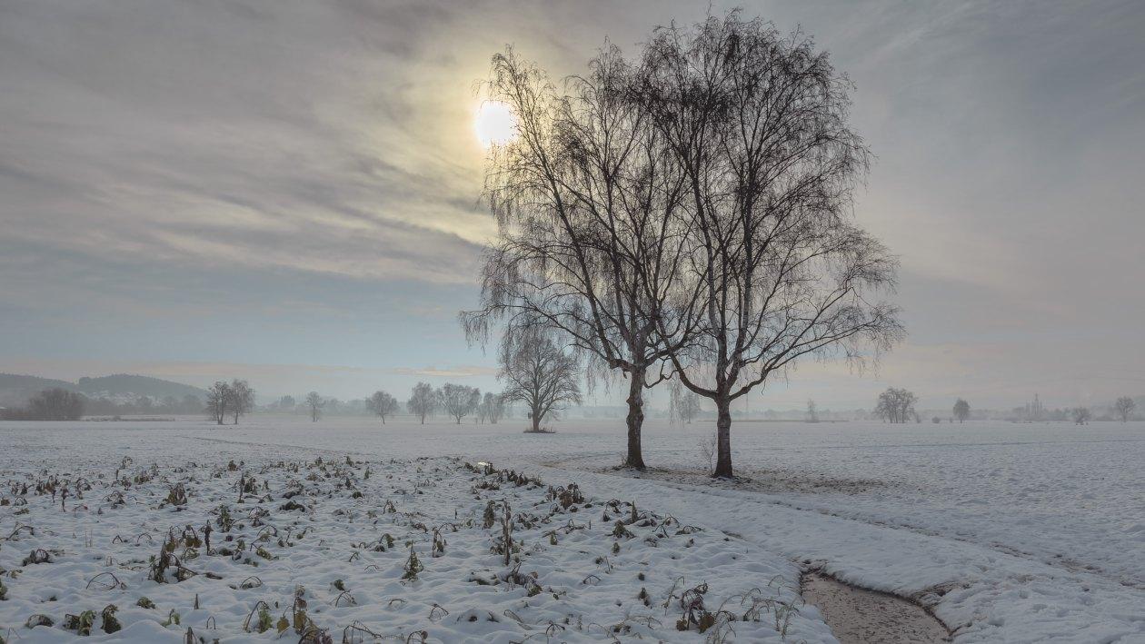 Bäume im Salemer Tal