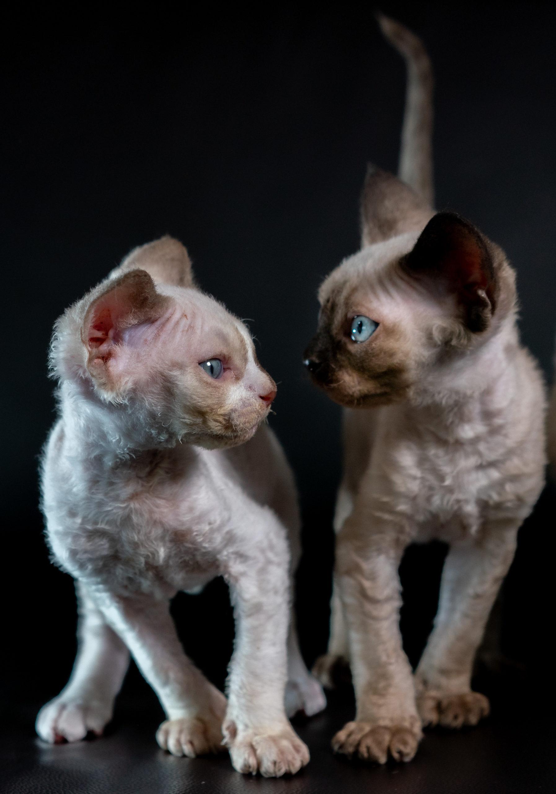kitties_0121-14