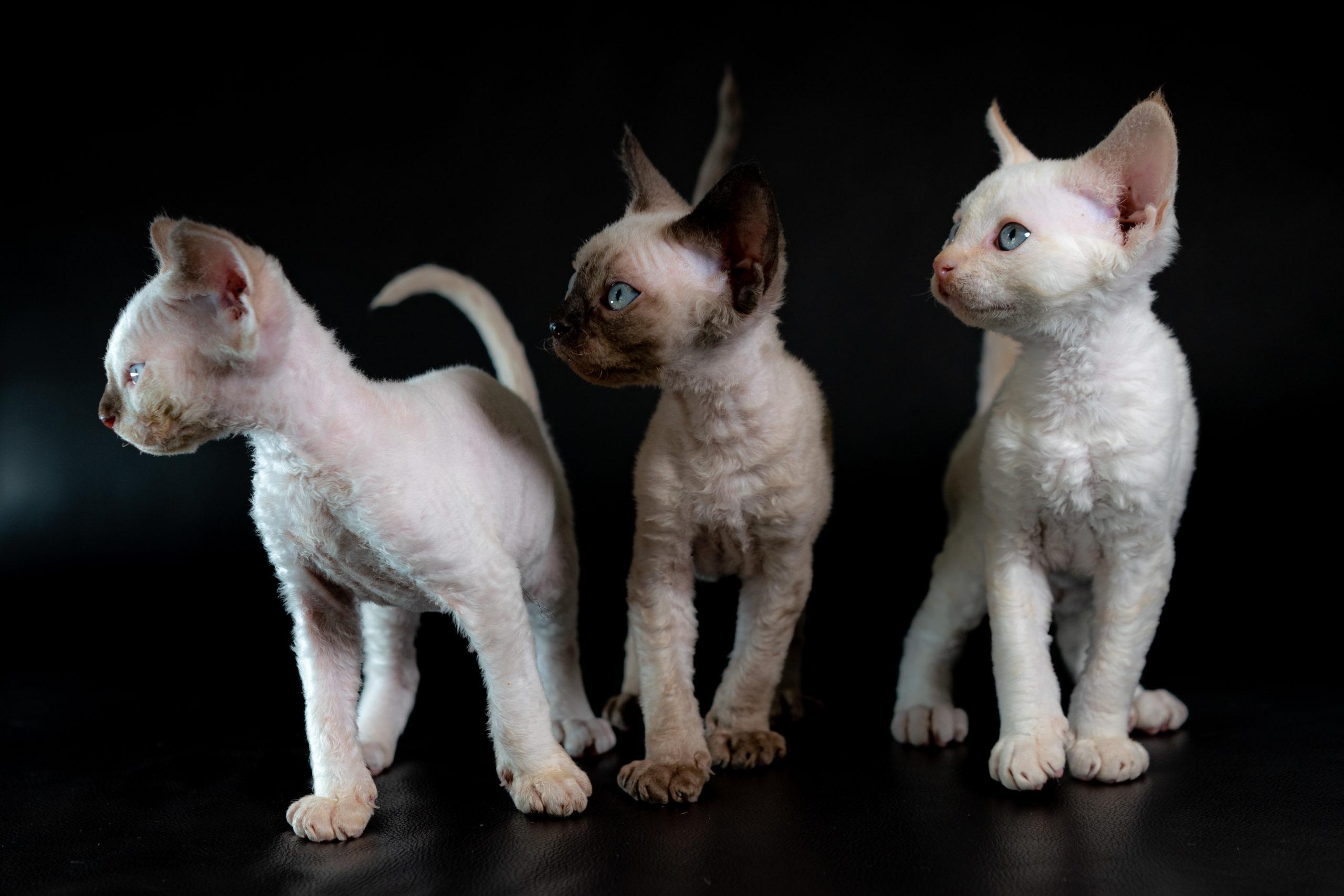 kitties_0121-16