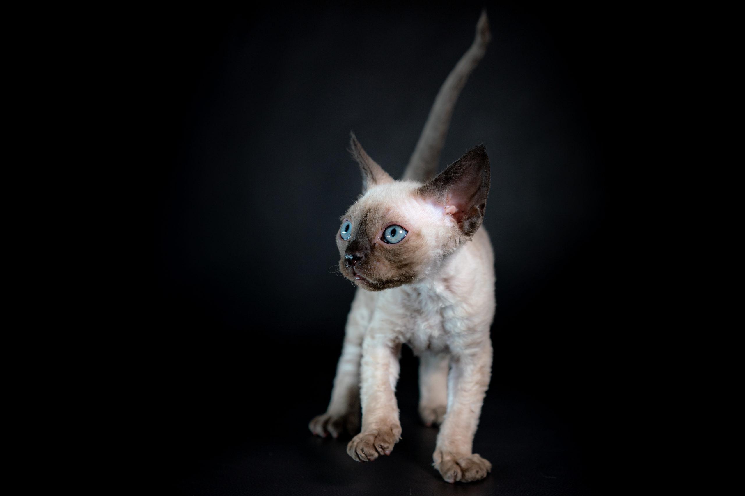 kitties_0121-6