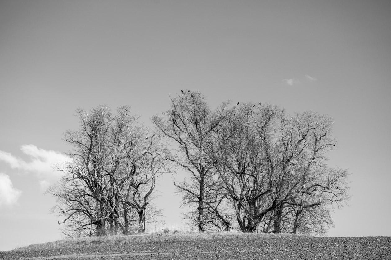 Kahl im Winter aber mit Vögeln