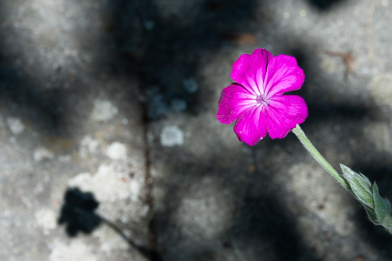 Garten Blüten