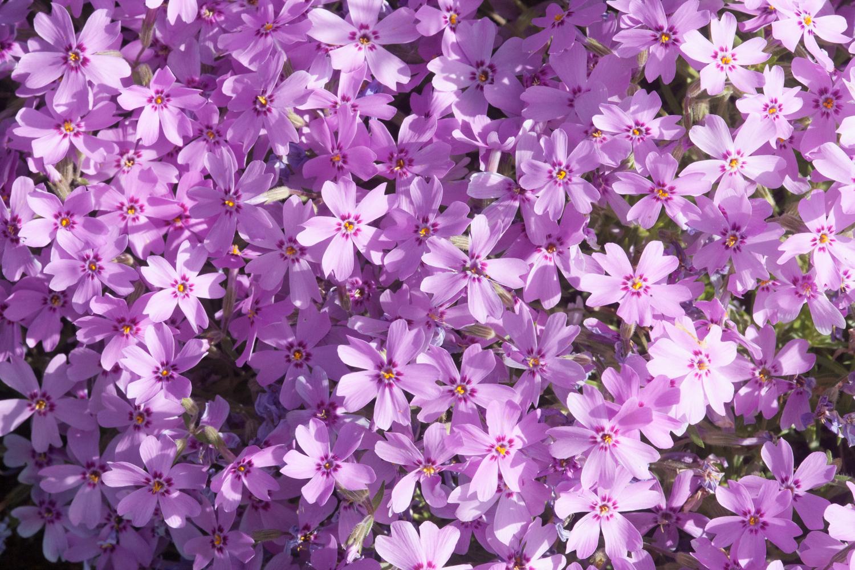 Garten, Blumen Blüten