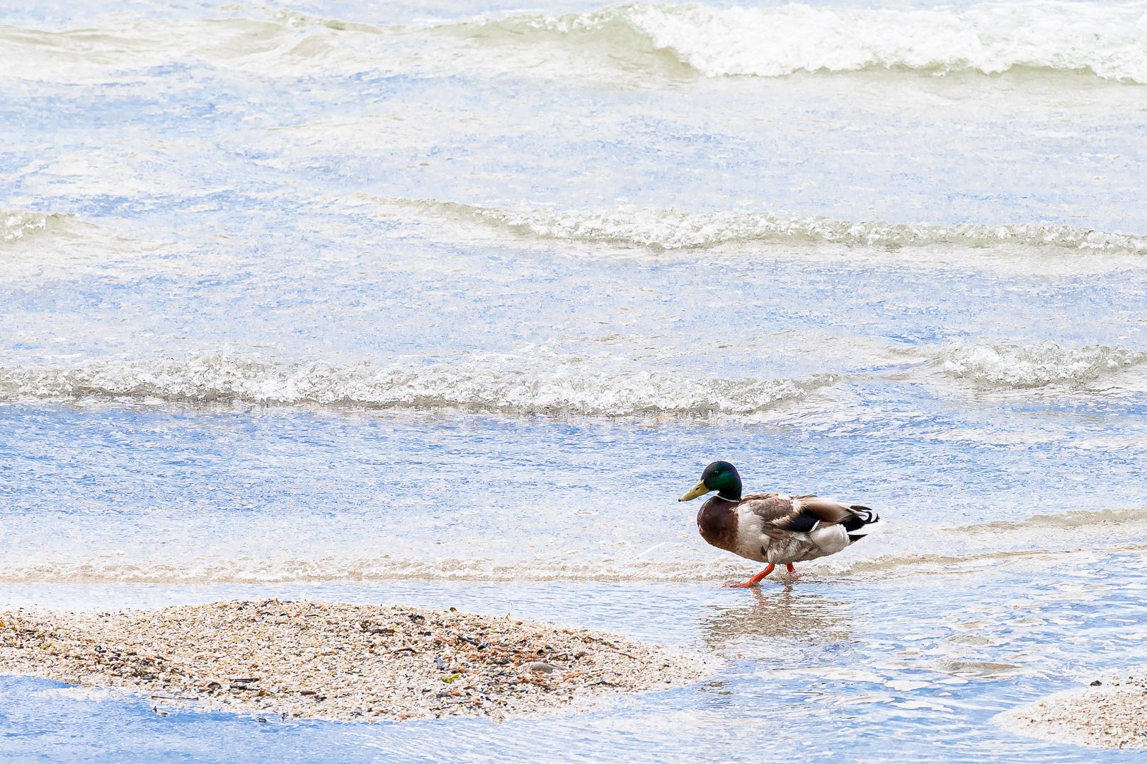 Wasser für die Enten - Manfred Mall