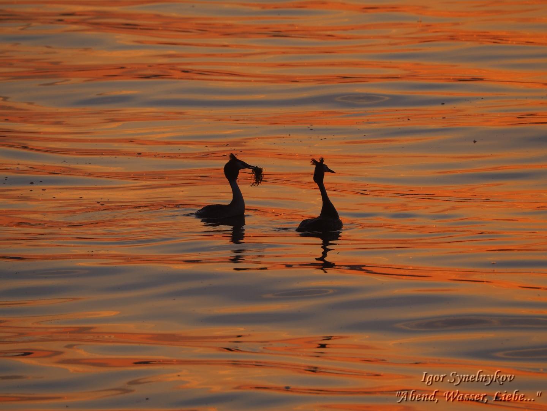 Abend, Wasser, Liebe ... - Igor Synelnykov