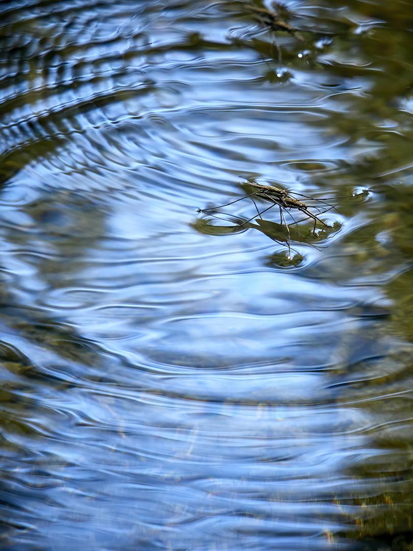 Tanz auf dem Wasser - Sabine Wohlbold