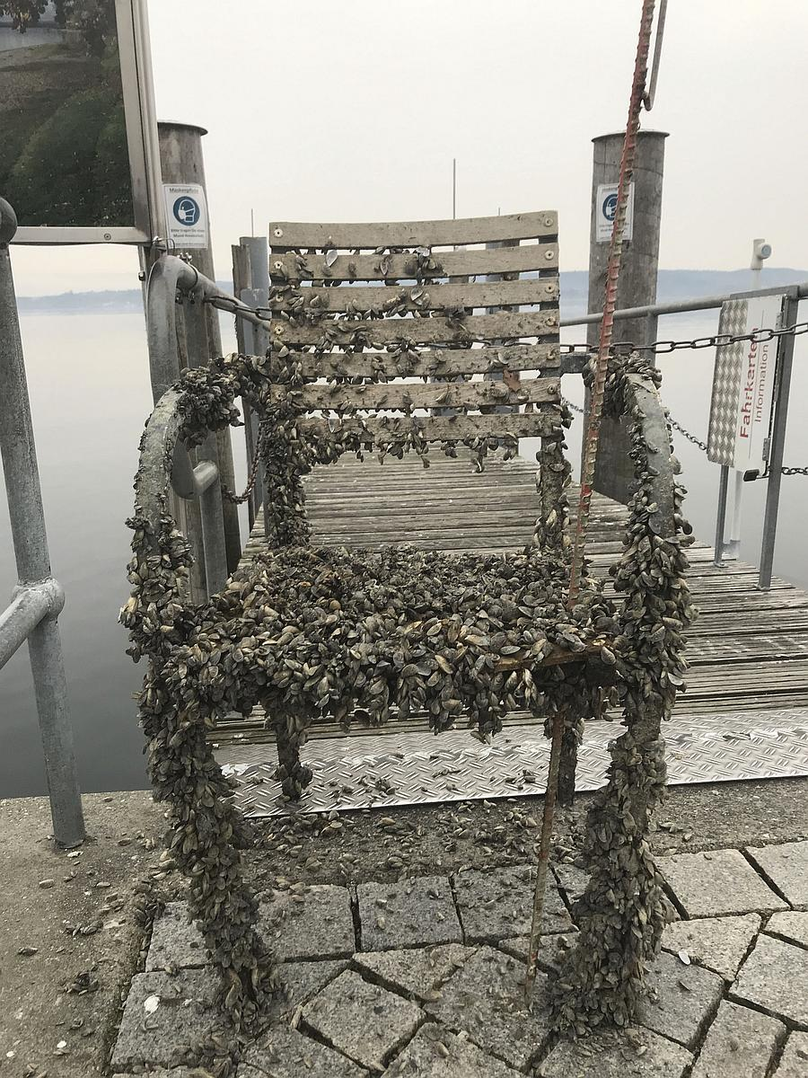 Alter Stuhl Foto: Uwe Neumann