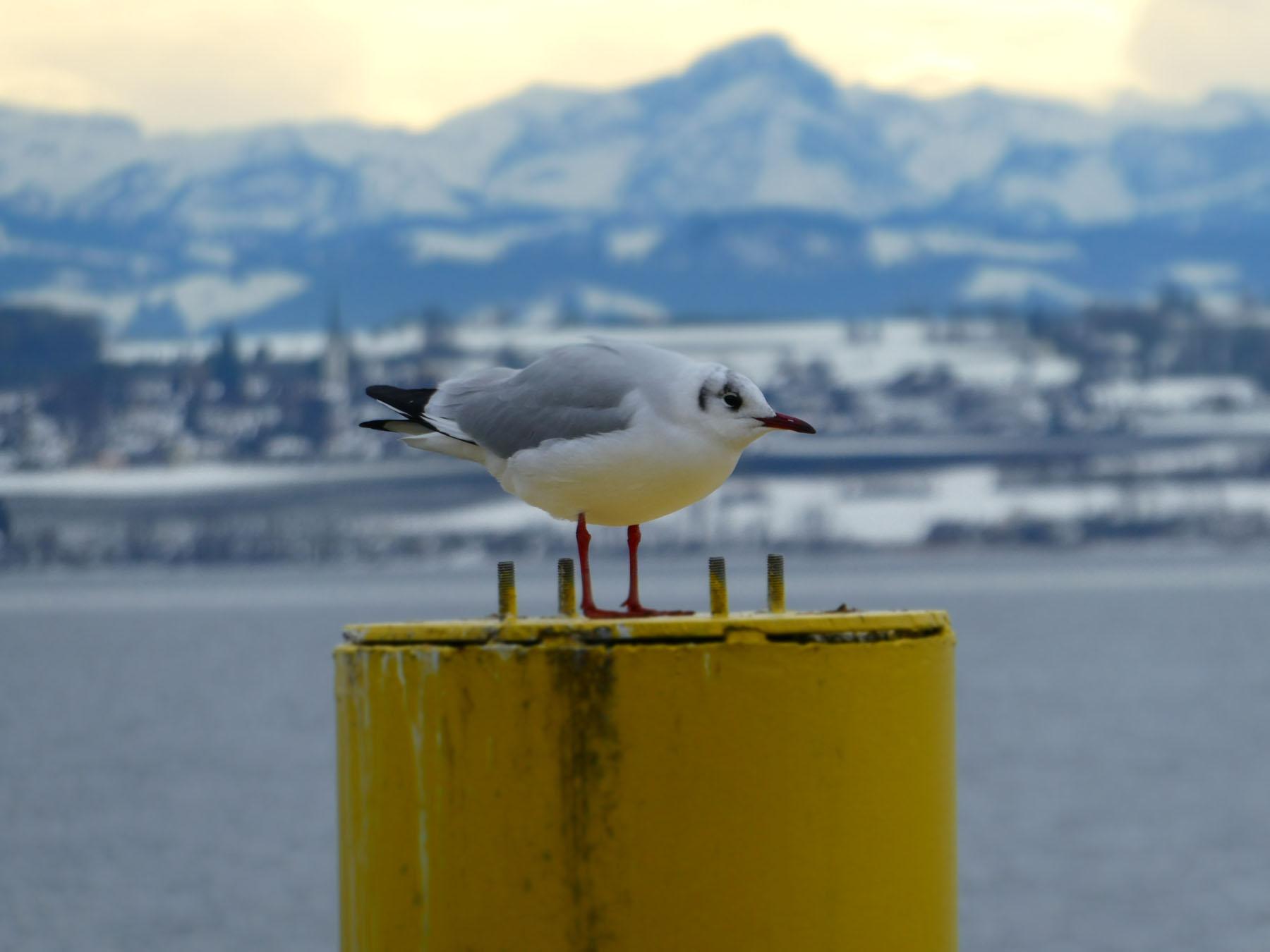 Sie friert! Foto: Uwe Neumann